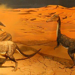 Geology and Paleontology