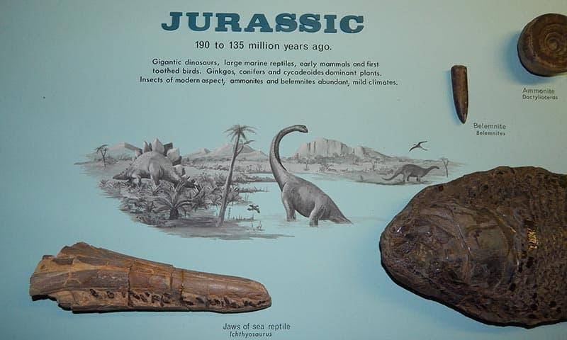 Dinosaurs In Zimbabwe